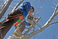 Find Tree Surgeons to Trim a Tree in the UK