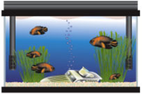 Find Cheap Fish Tanks and Aquarium Supplies