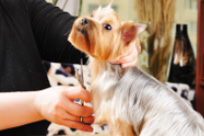 Find the UK Mobile Dog Grooming